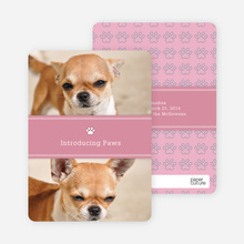 2 Photo Dog Cards - Pink