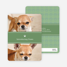2 Photo Dog Cards - Green