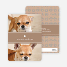 2 Photo Dog Cards - Orange