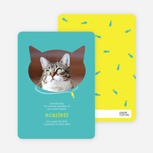 Cat Head Photo Card - Blue