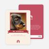 Dog Story Card - Main View