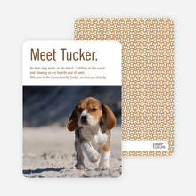 Dog Story Puppy Photo Cards - Brown