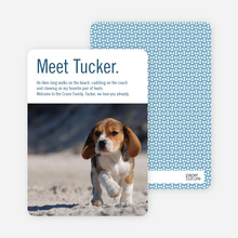 Dog Story Puppy Photo Cards - Blue