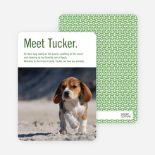 Dog Story Puppy Photo Cards - Green