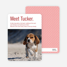 Dog Story Puppy Photo Cards - Red
