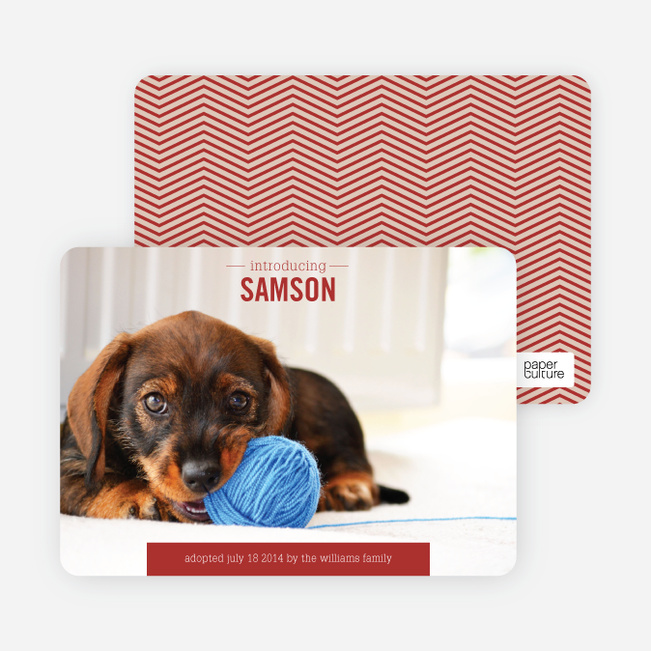 Puppy Announcements - Blue
