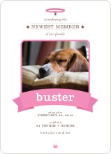 Banner Announcement Dog Photo Cards - Red