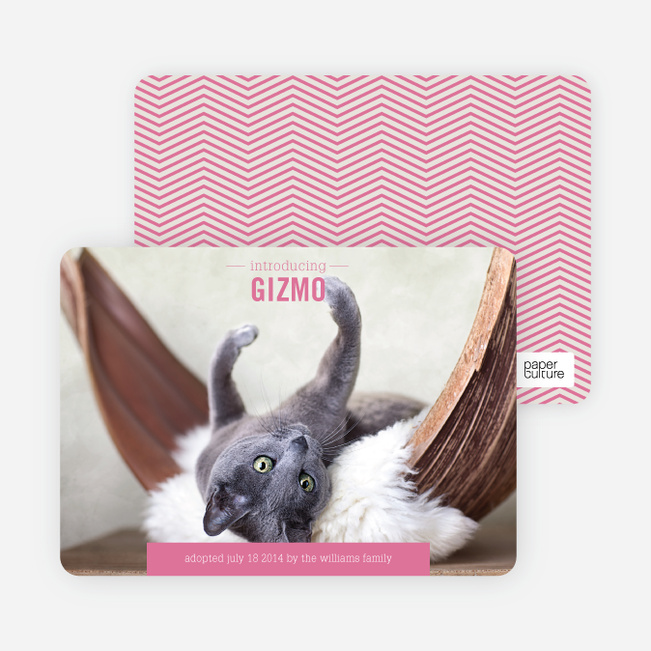 Kitten Pet Cards - Blue