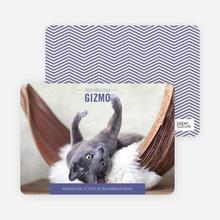 Kitten Pet Cards - Purple