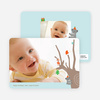 Koala Photo Cards for the Holidays - Powder Blue