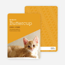 Kitty Cat Cards - Orange