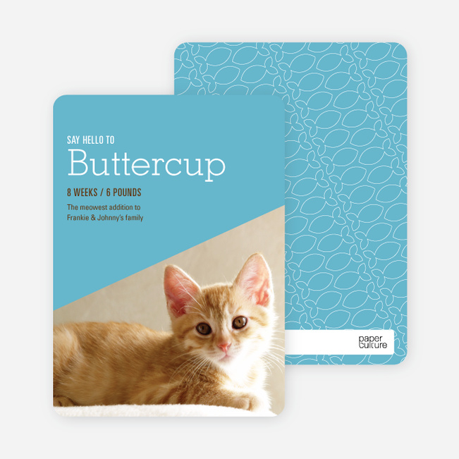Kitty Cat Cards - Blue