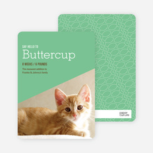 Kitty Cat Cards - Green