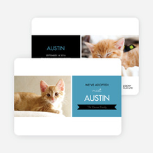 Pet Adoption Cards - Blue