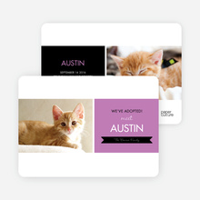 Pet Adoption Cards - Purple