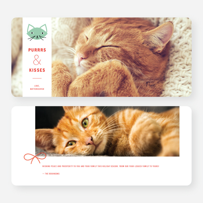 Purrs and Kisses Holiday Cards - Green